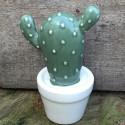 cactus pot N1 D6.5xH10.5 deco