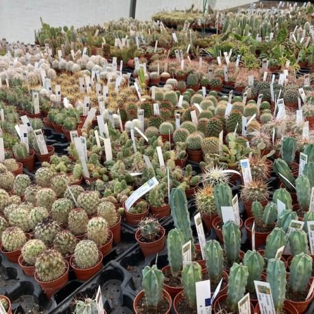 cactus pot 5.5 cm