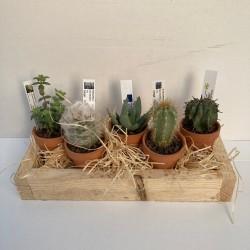 set 5 plantes pot terre 6 cm support bois