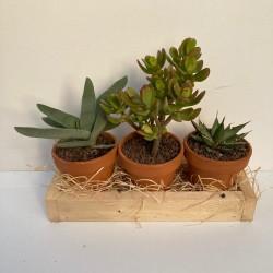 set 3 plantes pot terre 11 cm support bois