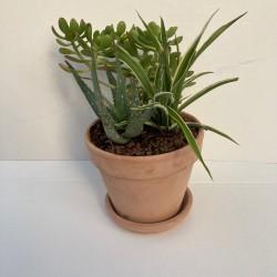 Assortiment plantes dans pot terre antique 15 cm