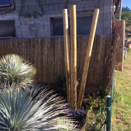 Bambou Naturel 240x11/ 12cm