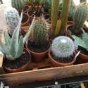 Plante pot terre 13 cm