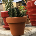 Cactus ou suc pot terre 6 cm