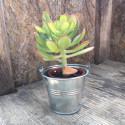 cactus ou succulentes en pot zinc