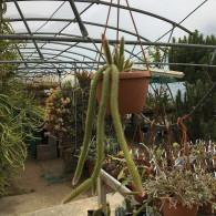 Les cactus par forme